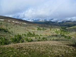 oakpinelandscape